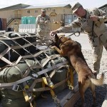 Veteran Canine Survives War: Dies of Dog Cancer