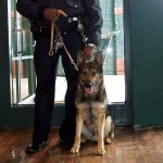 Police Dogs Training Methods Paying Off for K9 Officers