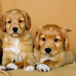 What's the Best Puppy Food: Dry, Semi-Moist or Moist?