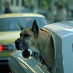 Best Puppy Travel Tips: Minimize Stress for Your Pet