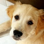 Best Puppy Training: Don't Forget to Train Your Kids