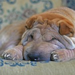 Dog Obesity Health Problems: Best Puppy Weight Loss
