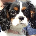 Best Puppy Dog Psychology Training Method