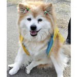 Oldest Dog: Guinness Book of Records Dies in Japan Aged 26