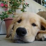 Dog Adoption Centers: PetSmart Charities' Rescue Waggin' Program