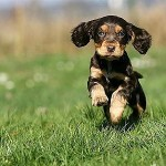 Best Puppy Exercise: How Much is Too Much, How Little is Too Little?