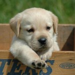 550 Most Popular Names for Puppies