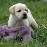 Best Puppy House Training Tips Using Clicks and Treats