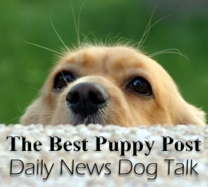 Best Puppy Post Curation Policy