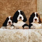 Best Puppy Holistic Dog Care Tips
