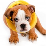 Best Puppy Tips: How Do Dogs Communicate With Humans?