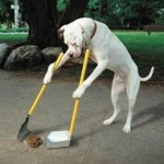 Top 10 Tips on How to Stop a Dog Pooping in Your Yard